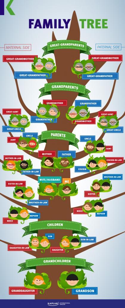 شجرة العائلة بالانجليزية إنفوجرافيك Family Tree Kaplan Blog