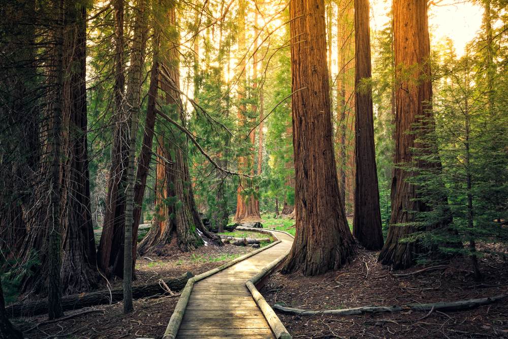 Take a day trip to the Sequoia National Park in California.