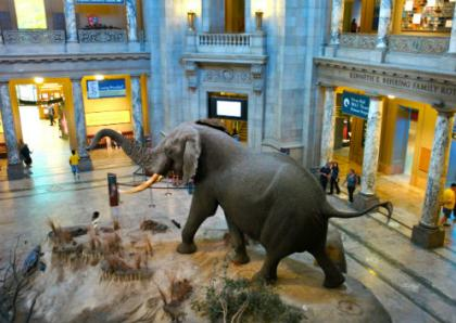 Washington, D.C. die beste Stadt in den USA ist - Natural History Museum Washington D.C.