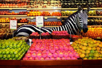 Animals-In-The-Supermarket2